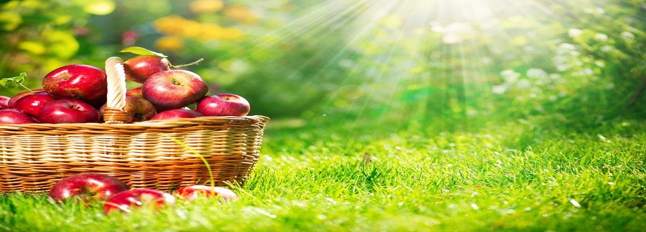 KRK International - Fruits Import & Export